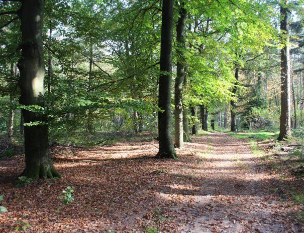 overview of Forest Utrechtse heuvelrug in autumn